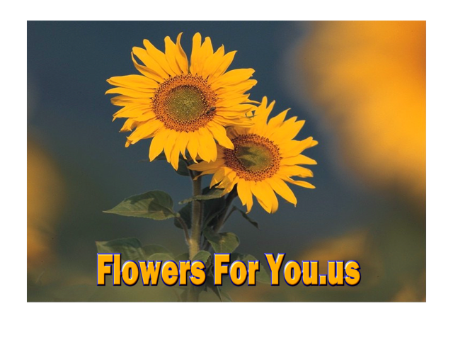 FlowersForYou.us